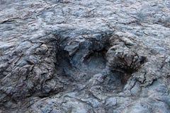 Reusachtige dinosaurusvoetafdrukken, Maragua, Bolivië Royalty-vrije Stock Foto's