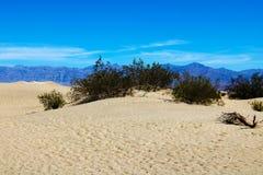 Reusachtige duinen van de woestijn Fijne plaats voor fotografen en reizigers Mooie structuren van zandige barkhans stock foto's