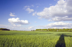 Reusachtige groene weide en boomschaduw. Bewolkte blauwe hemel Royalty-vrije Stock Afbeelding