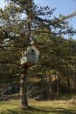 Reusachtige houten nestvogeldoos royalty-vrije stock fotografie