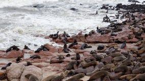 Reusachtige kolonie van Bruine bontverbinding - zeeleeuwen in Namibië Royalty-vrije Stock Afbeeldingen
