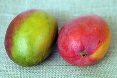 Reusachtige mango stock foto's