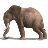 Reusachtige olifant vector illustratie