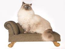 Reusachtige Ragdoll kattenzitting op bruine bank Royalty-vrije Stock Foto's