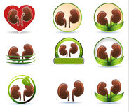 Reusachtige reeks nierenpictogrammen vector illustratie