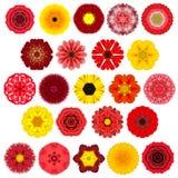 Reusachtige Selectie van Diverse Concentrische Mandala Flowers Isolated op Wit Royalty-vrije Stock Afbeeldingen