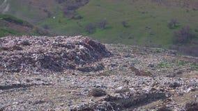 Reusachtige stads giftige stortplaats waar de kraaien en de zeemeeuwen vliegen stock videobeelden
