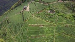 Reusachtige Theeaanplanting op Alishan-Gebied, Taiwan Lucht Mening stock video