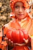 Reusachtige tomaat royalty-vrije stock afbeelding
