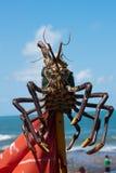 Reusachtige zeekreeft Royalty-vrije Stock Fotografie