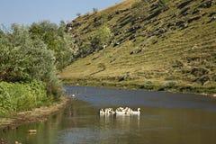Reut river in Trebujeni. Moldova Royalty Free Stock Images
