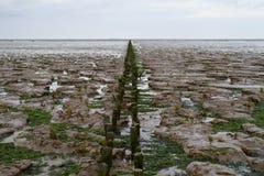 Reutilização da terra Imagem de Stock Royalty Free