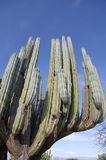 Reuze cactus royalty-vrije stock foto