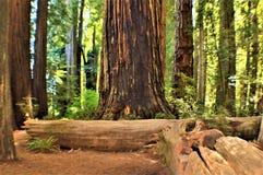 Reuze Californische sequoia's royalty-vrije stock fotografie