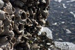 Reuze Eendenmosselen Stock Afbeelding