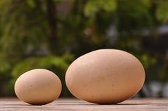 Reuze en kleine eieren Royalty-vrije Stock Fotografie