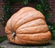 Reuze Oranje Pompoen stock foto's