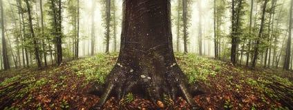 Reuze oude boom in surreal symmetrisch bos royalty-vrije stock afbeelding