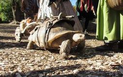 Reuze schildpad royalty-vrije stock fotografie