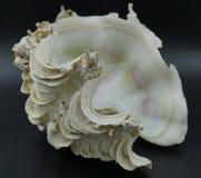 Reuze tweekleppig schelpdiershell stock afbeelding