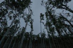 Reuzebomen in bos bij nacht stock foto's