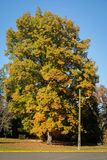 Reuzeboom in een park van Oregon Stock Fotografie