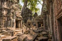 Reuzeboom en wortels in tempel Ta Prom Angkor wat royalty-vrije stock fotografie
