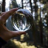Reuzecalifornische sequoiabos met Licht die door binnen Gevangen Bomen komen stock afbeeldingen