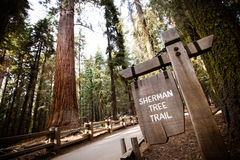 Reuzeforest sequoia national park stock afbeelding