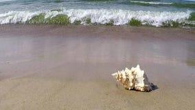 Reuzekikker Shell op een strand stock footage