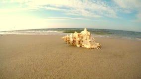 Reuzekikker Shell op een strand stock video