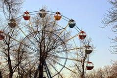 Reuzenrad in een de lentepark onder bomen Stock Fotografie