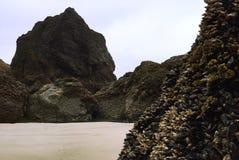 Reuzerotsen op de stranden van Oregon ` s Royalty-vrije Stock Foto