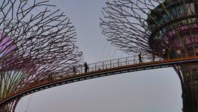 Reuzesupertrees en OCBC Skyway stock video