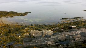 Reuzetreden in Harpswell Maine stock footage