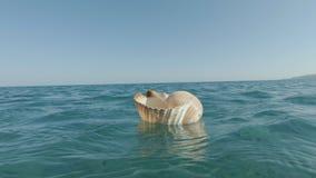 Reuzetun shell floating stock videobeelden