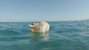 Reuzetun shell floating on the sea-Oppervlakte stock videobeelden