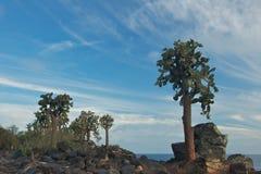 Reuzevijgencactuscactus in Santa Fe Island Royalty-vrije Stock Foto