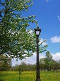 Revérbero do vintage entre ramos de florescência Fotos de Stock Royalty Free