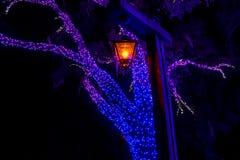 Revérbero e árvores iluminadas no jardim do Natal nos jardins 2 de Busch imagem de stock royalty free
