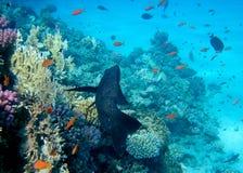 rev för 3 korall Fotografering för Bildbyråer