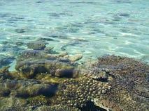 rev för 8 korall Royaltyfria Bilder