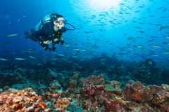 Rev för korall för dykare för ung kvinna undersökande fotografering för bildbyråer