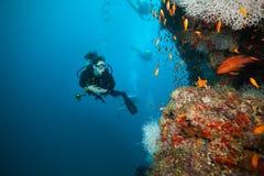 Rev för korall för dykare för ung kvinna undersökande Arkivfoto