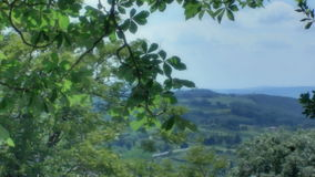 Revealing a Tuscany Landscape from behind a Tree stock footage