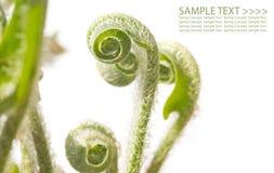 Revelação das frondas do fern imagens de stock