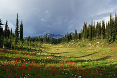 Revelstoke mountain Stock Image