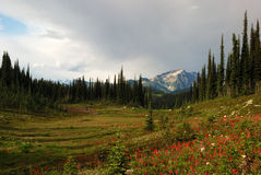 Revelstoke mountain Royalty Free Stock Photos
