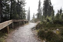 Revelstoke pathway. Lonely pathway on the foggy summit of Mount Revelstoke, Canada Royalty Free Stock Image