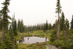 Revelstoke Pond. Quiet and eerie scenery with a pond and dead trees on Mount Revelstoke Royalty Free Stock Photo